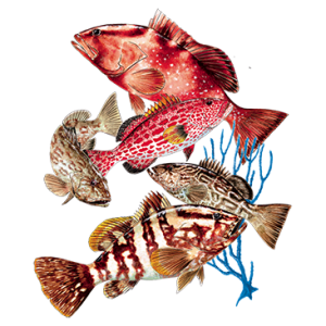 GROUPER GROUP