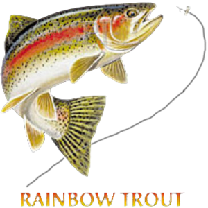 RAINBOW TROUT COMBINATION