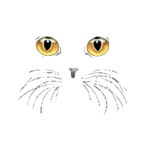 CAT FACE-YELLOW EYES