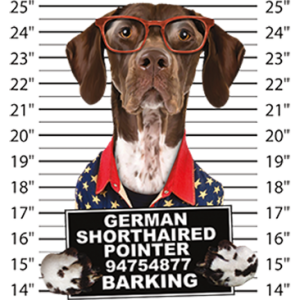 GERMANSHORTHAIRED POINTER BARKING