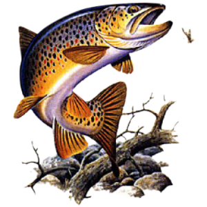 BROWN TROUT     14