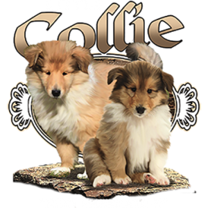 LITTLE COLLIE NEXT GENERATION
