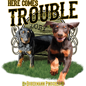 HERE COMES TROUBLE DOBERMAN