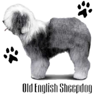 OLD ENGLISH SHEEPDOG   24