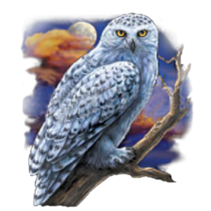WHITE SPOTTED OWL    13