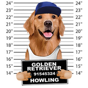 GOLDEN RETRIEVER MUGSHOT