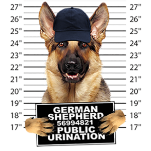 GERMAN SHEPHERD MUGSHOT