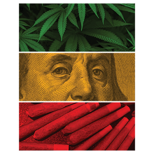 BEN FRANKLIN POT RASTA