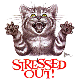 STRESSED OUT CAT  (Y)
