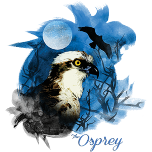 BIRDS OF PREY OSPREY NIGHT SKY